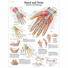 Hand and Wrist Chart - Anatomy and Pathology
