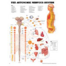 The AUTONOMIC NERVOUS SYSTEM LAMINATED ACC-8026